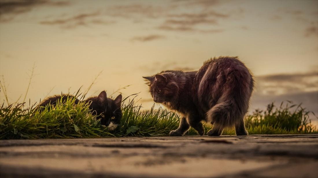 cats-3061372_1280.jpg