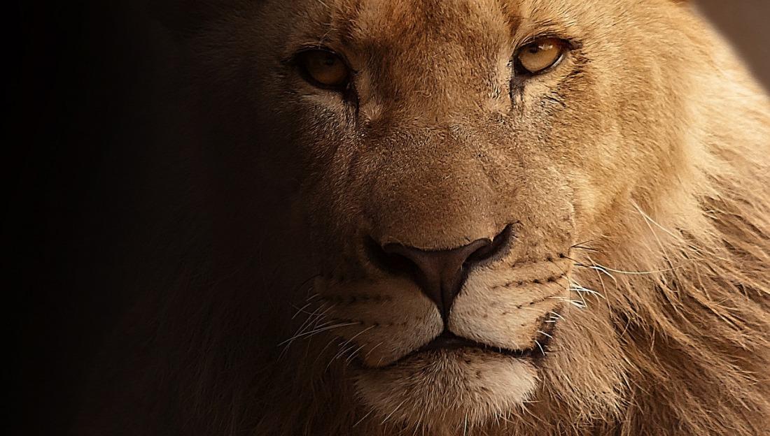 lion-617365_1280.jpg