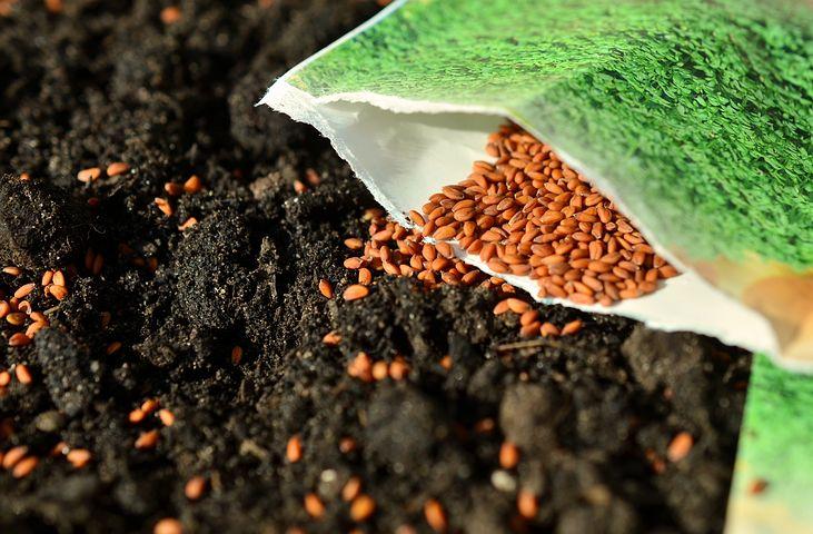 seeds-1302793__480.jpg